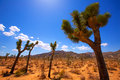 Joshua tree national park yucca valley mohave desert california in usa Stock Photo