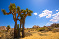 Joshua tree national park yucca valley mohave desert california in usa Royalty Free Stock Images