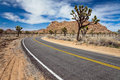 Joshua Tree Road Royalty Free Stock Images