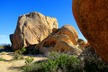 Joshua Tree Rocks Royalty Free Stock Images