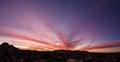 Joshua Tree Sunset Panorama Royalty Free Stock Photo