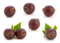 Josta hybrid gooseberry and black currant Stock Photo