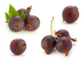 Josta hybrid gooseberry and black currant Royalty Free Stock Photo