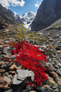 Journey through Altai mountains to Aktru. Hiking to snowy peaks of Altai mountains. Survival in harsh conditions, beautiful nature Royalty Free Stock Photo