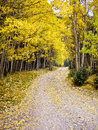 Journey through the aspens in Fall Colorado USA Stock Photos