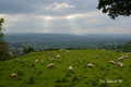 Journey through wales with camera ruthin in nature i see sheep in the mountains been beauty and views and travel sky Royalty Free Stock Photography