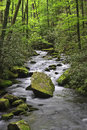 Joyce kilmer forest stream in the springtime Stock Photography