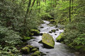Joyce kilmer forest stream in the springtime Royalty Free Stock Photo