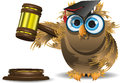 Judge owl Stock Photo