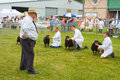 Judging torfaen sheep at the royal welsh show being judged Stock Photos