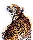Juguar. tropical wild cat watercolor illustration. Brazilian wildlife fauna. Royalty Free Stock Photo
