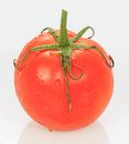 Juice Tomato Royalty Free Stock Photo