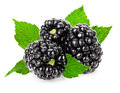 Juicy Blackberry Isolated On T...