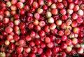 Juicy cherries fruit background, top view. Royalty Free Stock Photo