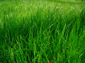 Juicy grass Royalty Free Stock Images