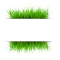 Juicy grass under a sheet Royalty Free Stock Photo