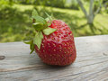 Juicy strawberry Stock Photos