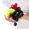Juicy sunny grapes in hand new crop of sun of different varieties Stock Photography