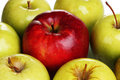 Juicy sweet apples closeup Royalty Free Stock Photo