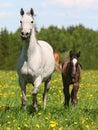 Jument et poulain Photo stock