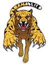 Jumping cheetah Royalty Free Stock Photo