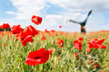 https---www.dreamstime.com-stock-photo-girl-white-dress-sitting-field-poppies-girl-poppy-field-image109281745