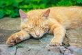 Junge rote kitten sleeping Lizenzfreie Stockfotografie