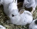 Junger bunny rabbits Stockfotos