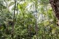Australian Jungle