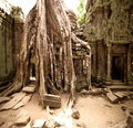Jungle at Angkor Wat in Cambodia Royalty Free Stock Image