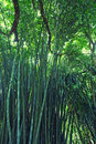 Jungle bamboo and tropical plants in sri lanka rainforest Stock Image
