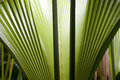 In the jungle big palm leaves close up Stock Images