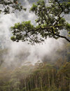 Jungle Canopy Royalty Free Stock Photo