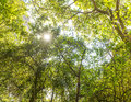 Jungle Canopy Africa Royalty Free Stock Photo