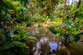 Jungle dense tropical vegetation with a small pool of murky water Stock Images