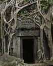 Jungle doorway Royalty Free Stock Photo