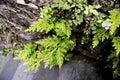 Jungle fern Royalty Free Stock Photo