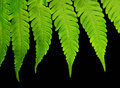 Jungle Fern Macro View Stock Photo