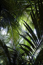 Jungle Ferns Royalty Free Stock Images