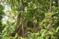 Jungle forest, abundant vegetation