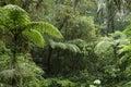 Jungle Forest / Nature Landscape
