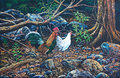 Jungle fowl in the forest Royalty Free Stock Images