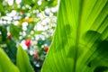 Jungle Green Leaves Summer Bac...