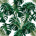 Jungle. Green thickets of tropical palm leaves and monstera. Seamless floral pattern. Isolated on a white background Royalty Free Stock Photo