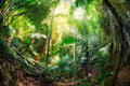 Jungle at krabi thailand deep green Stock Image