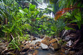 Jungle landscape with creek vallee de mai praslin seychelles Royalty Free Stock Photo