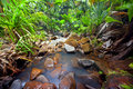 Jungle landscape with creek vallee de mai praslin seychelles Stock Image