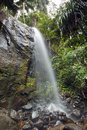 Jungle landscape with waterfall vallee de mai praslin seychelles Royalty Free Stock Photography