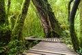 Jungle landscape wooden bridge at misty tropical rain forest travel background doi inthanon park thailand Royalty Free Stock Photos
