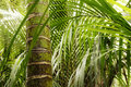 Jungle lush foliage in tropical Stock Photos